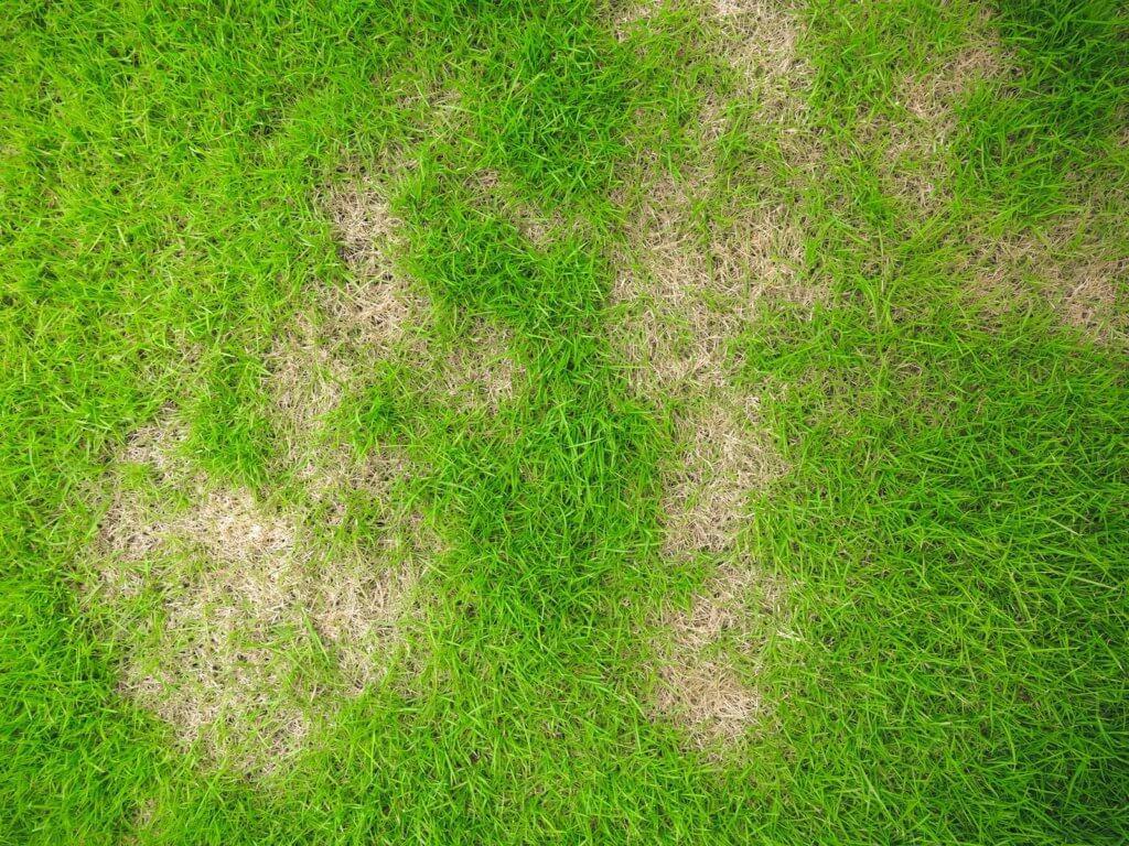 grass holes