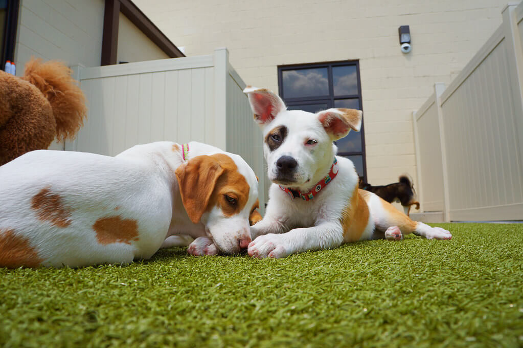 Artificial turf with pets